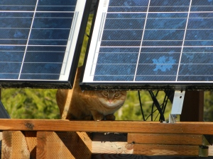 Getting a charge... Our cat hangs out with the solar panels on our first official sunny day after weeks of gray skies.