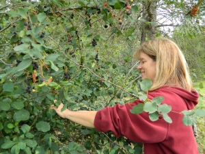 A berry delightful Saskatoon day... Krista is picking until her heart is content which was about 30 minutes.