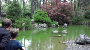 A peaceful summer rain over a beautiful pond in the Japanese Gardens at Manito Park.