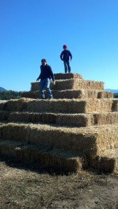King of the straw bale pyramid... Just another of the many fun activities the kids can do at Hickey Farms.