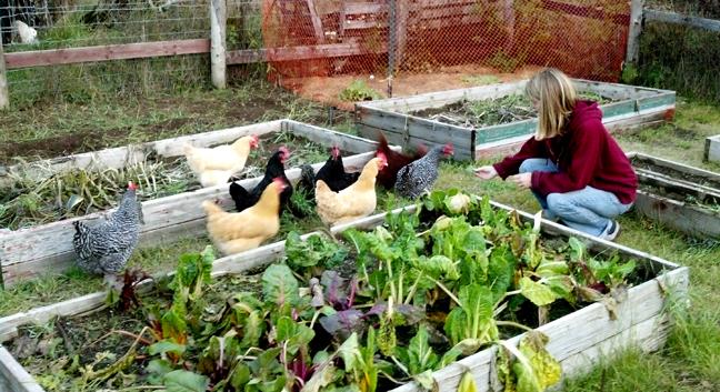 krista-feeding-chicks