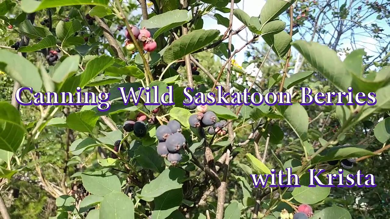 Canning Wild Saskatoon Berry Jam